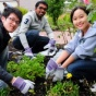 Three diverse students gardening.