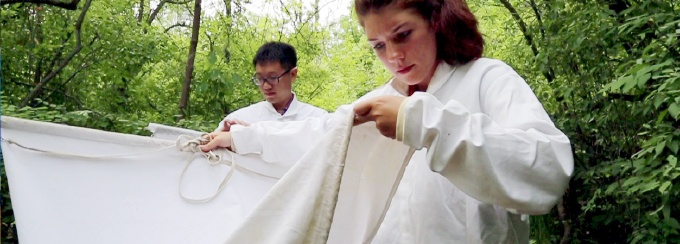 Master of Public Health research students using nets in the woods to assess the area for ticks.