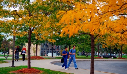 UB South Campus during the fall.